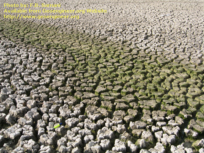 Title: Mud crack<br>Title: Mud crack developed at the dried out bottom of Parishan Lake near Kazerun town.