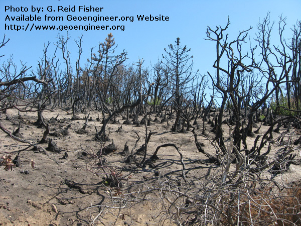 Title: Burnt chaparral (brush) and slightly hydrophobic soil<br>Title: Burnt chaparral (brush) and slightly hydrophobic soil, Arroyo Seco drainage, Monterey County, California, USA. 